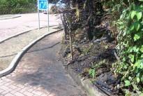 Brand eines Vorgartens in der Kohlstraße
